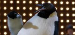 Pino il pinguino testo pubblicità Vodafone video
